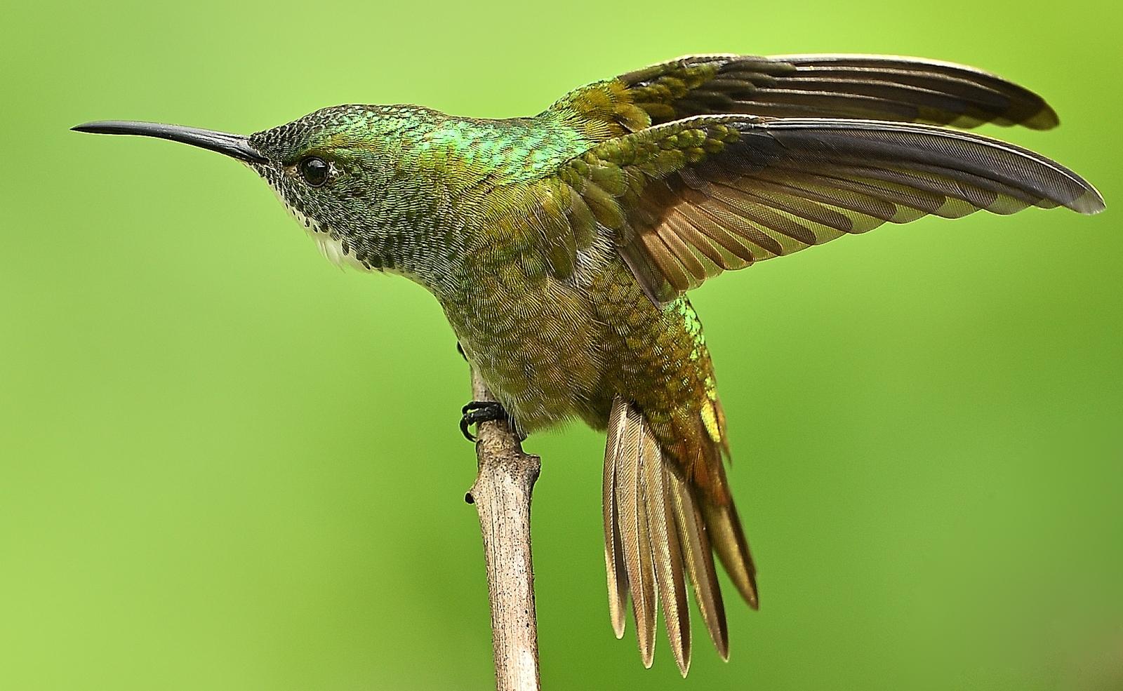 Hummingbird Stretch  Alistair Peterson