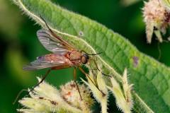 Fly Stuart Ward