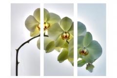 Orchids.-No-301