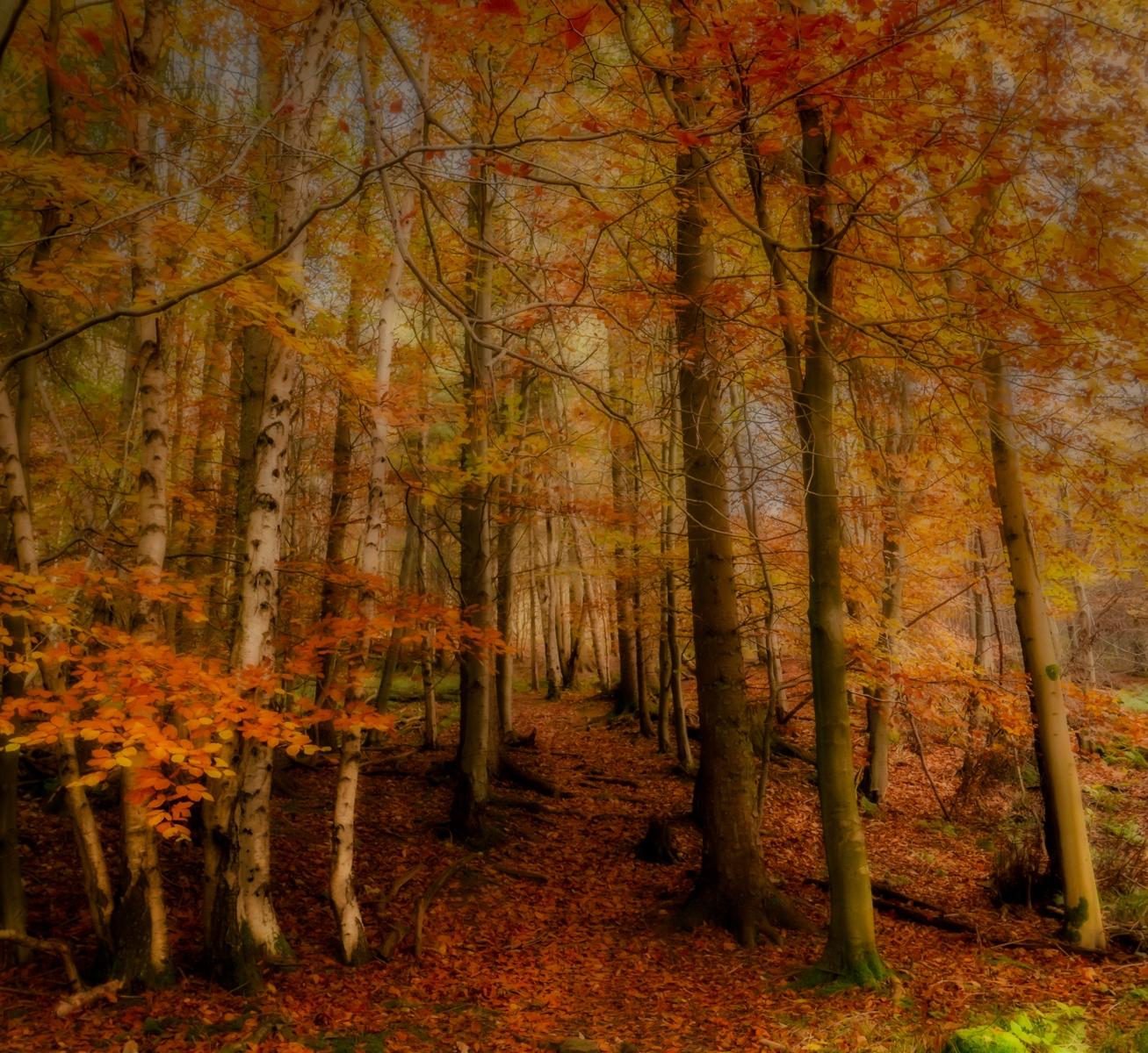 autumn mist - Suzanne Lamb