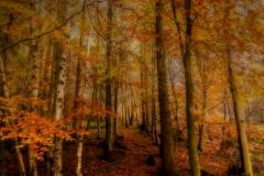 autumn mist- Suzanne Lamb