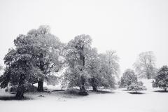 Fall-Snowfall-262